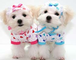 dog-clothing